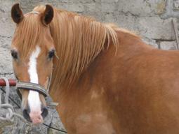 Mein Pferd Maxi