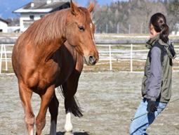 In Harmonie mit dem Pferd