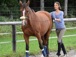 Pferd am Langen Zuegel