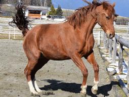 Mein Pferd Fleur