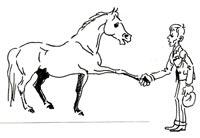 Zusammenarbeit Reiter-Pferd
