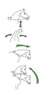 Schulung des Pferdes, Reiterhand